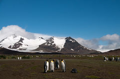 Rey Penguins en los llanos de Salisbury fotos de archivo libres de regalías