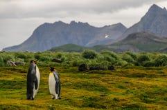 Rey Penguins en los llanos de Salisbury imagenes de archivo