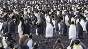 Rey pingüino metrajes
