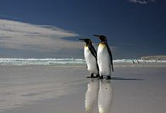 Rey pingüinos en la punta voluntaria Fotografía de archivo libre de regalías