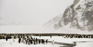 Rey pingüinos en un país de las maravillas Nevado Foto de archivo
