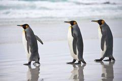Rey pingüinos - Islas Malvinas Foto de archivo libre de regalías