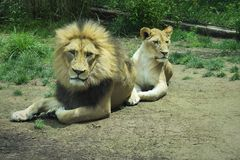 Rey y su reina imagenes de archivo