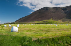 Reykjanes peninsula in summer, Iceland Stock Images