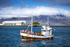 Reykjavik. Harbour whale watching tourist bout Iceland Stock Image