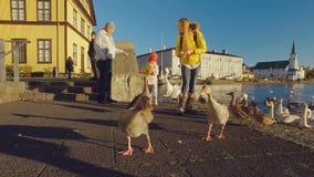 Reykjavik, Islanda - settembre 2016: la gente di camminata sta alimentando gli uccelli nel lago Tjornin nel centro della città, n stock footage