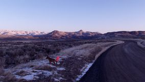 Reynolds Creek Road and Dan E. Dog Stock Photography