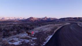Reynolds Creek Road und Dan E Hund Stockfotografie