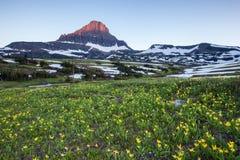 Reynolds Mountain över vildblommafält på Logan Pass, glaciär N Royaltyfria Foton