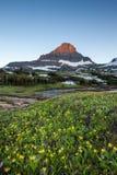 Reynolds Mountain över vildblommafält på Logan Pass, glaciär N Arkivfoto