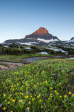 Reynolds Mountain over wildflower field at Logan Pass, Glacier N Stock Photo