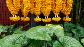 Rezando flores com plantas verdes imagem de stock