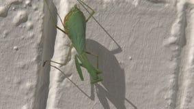 Rezando o passeio dos Mantises video estoque