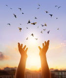 Rezar da mulher e pássaro livre que apreciam a natureza no fundo do por do sol Imagem de Stock Royalty Free