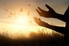 Rezar da mulher e pássaro livre que apreciam a natureza no fundo do por do sol Fotografia de Stock