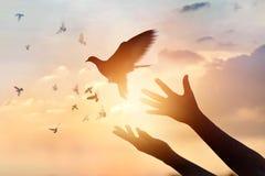 Rezar da mulher e pássaro livre que apreciam a natureza no fundo do por do sol Fotos de Stock