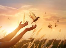 Rezar da mulher e pássaro livre que apreciam a natureza no fundo do por do sol imagem de stock