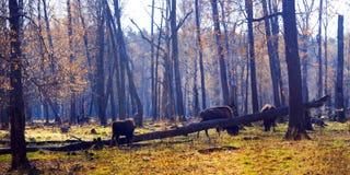 rezerwat przyrody Fotografia Stock