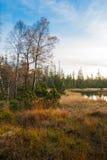 Rezerwat przyrody duży Hohlohsee Obrazy Royalty Free