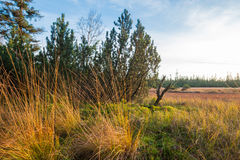 Rezerwat przyrody duży Hohlohsee Obraz Royalty Free