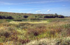 Rezerwat Przyrody, Fairburn Ings obraz stock