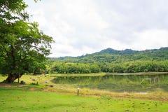 Rezerwuar przy Jedkod Pongkonsao Naturalną nauką i Ecotourism centem Obrazy Stock