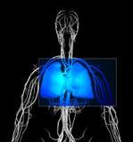 rezonans klatki piersiowej royalty ilustracja