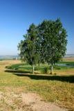 rezydenci brzozy ziemskiej mihailovskoe Zdjęcie Stock