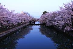 Réflexion de fleuve de fleurs Image stock