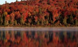 Réflexion de forêt de l'algonquin Images stock