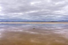 Réflexions dans l'oasis de désert Photo libre de droits