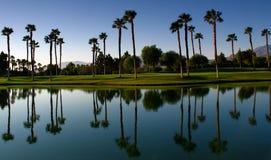 Réflexions de palmier Image stock