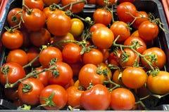 0rganic tomaten in een marktkraam Royalty-vrije Stock Afbeeldingen