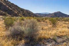 Région sauvage de la savane de prairie de la Californie Photos libres de droits