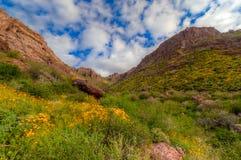 Région sauvage de Mountan d'AZ-Superstition Photos libres de droits