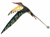 Rhamphorhynchus Jurassic Pterosaur. Rhamphorhynchus was a carnivorous pterosaur that lived in England, Tanzania, Spain and Germany during the Jurassic Periods stock illustration