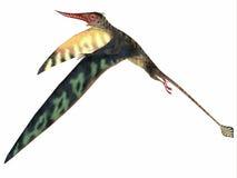 Rhamphorhynchus Pterosaur jurásico Fotografía de archivo libre de regalías