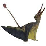 Rhamphorhynchus Pterosaur Stock Photography