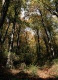 Rhapsodie dans l'automne Photos libres de droits