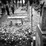 Rhei de Panta Regard artistique en noir et blanc Photographie stock libre de droits