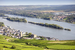 Rheingau Riesling Vineyards Royalty Free Stock Photos