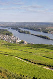Rheingau Riesling Vineyards Royalty Free Stock Photography