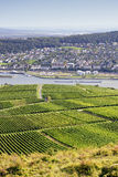 Rheingau Riesling Vineyards Royalty Free Stock Photo