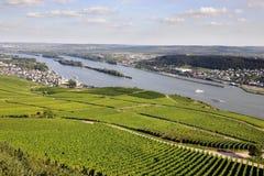 Rheingau Riesling vingårdar fotografering för bildbyråer