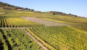 Rheingau vineyards Stock Photo