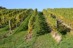 Rheingau vineyards Stock Photos