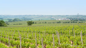 Rheinhessen Royalty Free Stock Images