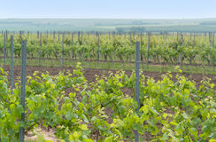 Rheinhessen Stock Photography