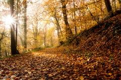 Rheinsteig-Wanderweg-Herbst färbt Siebengebirge Deutschland Lizenzfreies Stockfoto