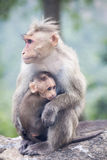 Rhesus Macaque mother and baby sitting near a highway Stock Image